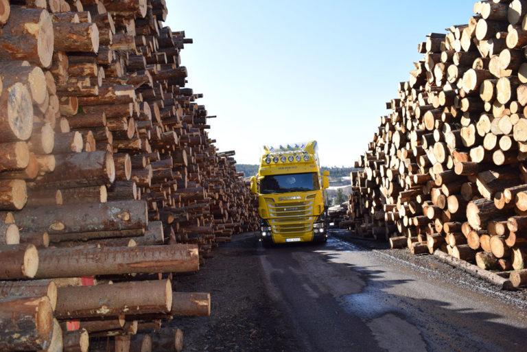 Bilde-4-tømmeret-lagres-ved-sagbruket